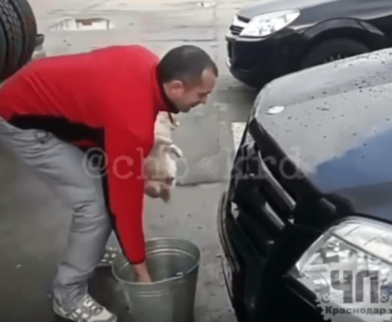 Милиция  проверяет видео, накотором мужчина моет автомобиль котом