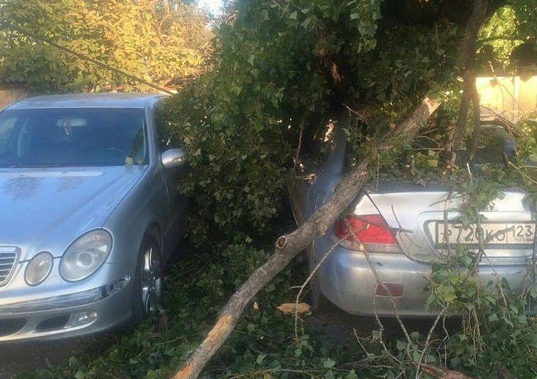 ВКраснодаре поступили 14 сообщений оповаленных деревьях после шторма